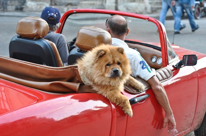 This is how we roll in Havana