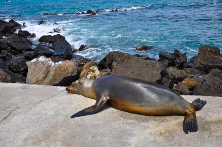 Floreana Island day trip, Galapagos