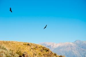 Cruz del Condor, Colca Valley, Peru