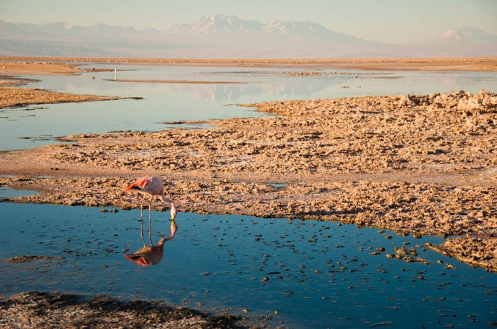 Altiplanic Lagoons tour with Grado 10, Atacama Desert, Chile