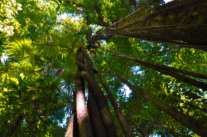 Trees in Corcovado National Park, Costa Rica