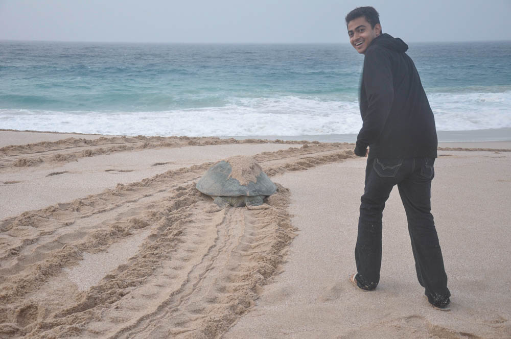 After nesting, turtles return to the sea