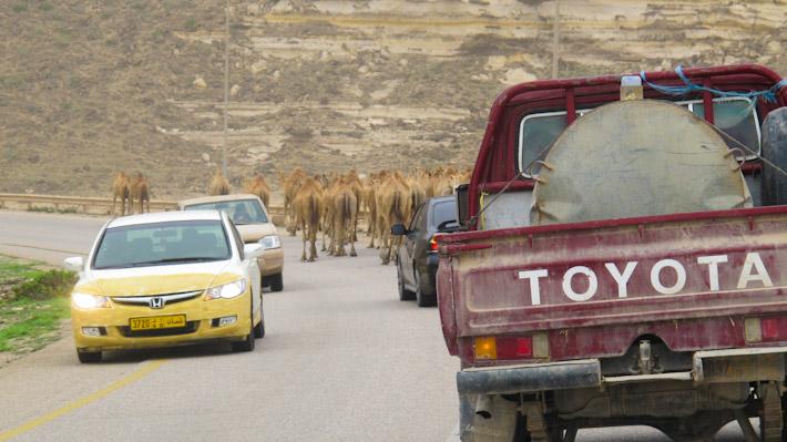 Traffic jam, Omani-style!
