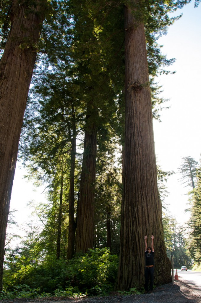 Ashray comparing sizes at Avenue of Giants