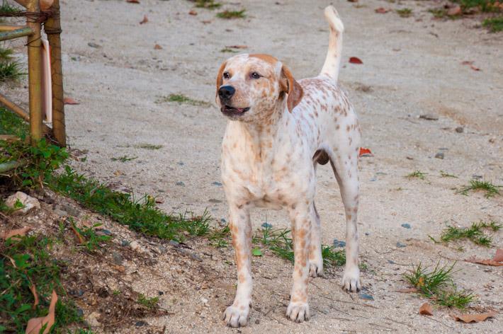 Ygritte dog