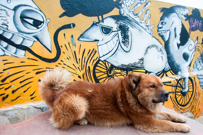 Dogs and art in Valparaiso