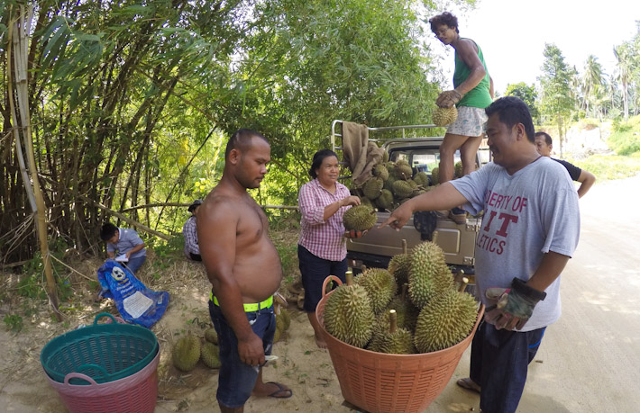 Durian farmers in the island of Koh Samui