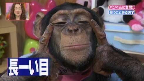 According to a Taiwanese girl, Korean look like this Chimp!