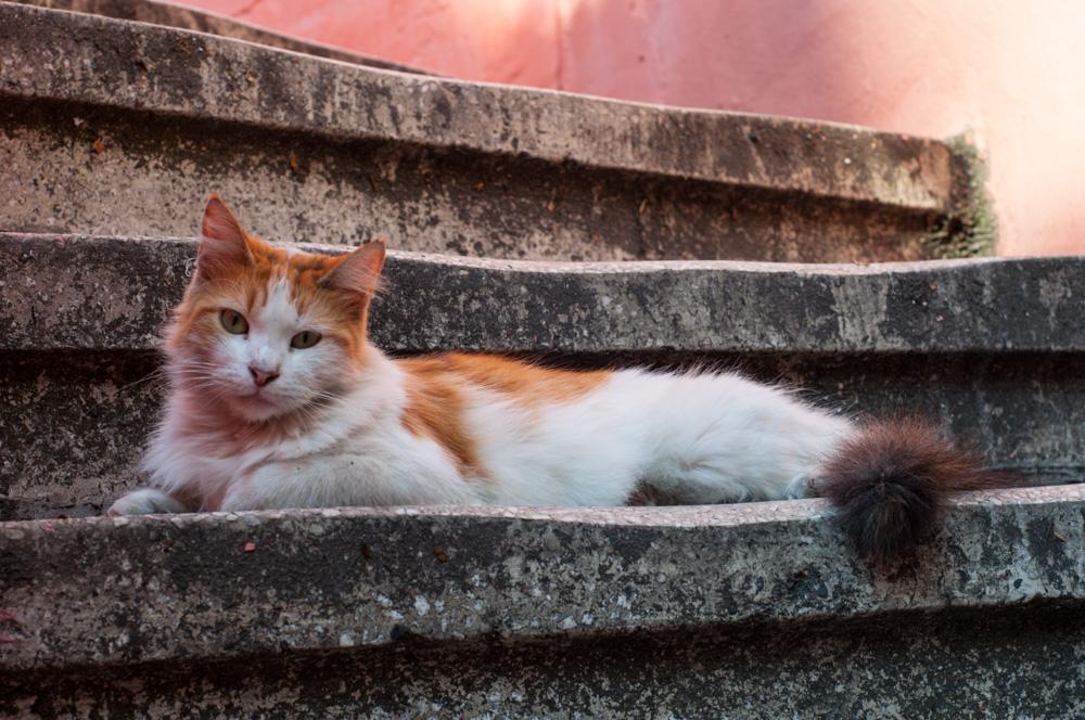 Cat Winslet