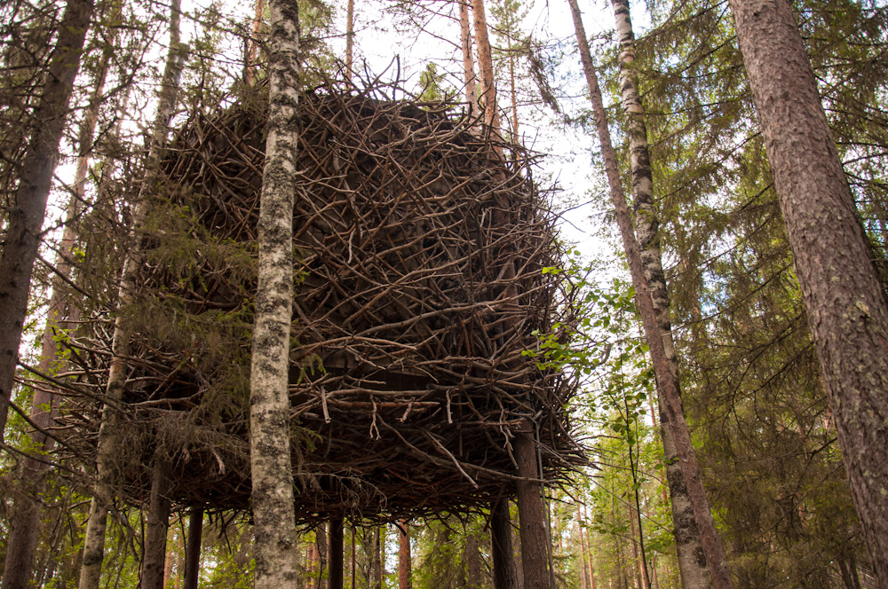 The Bird's Nest at Treehotel Sweden