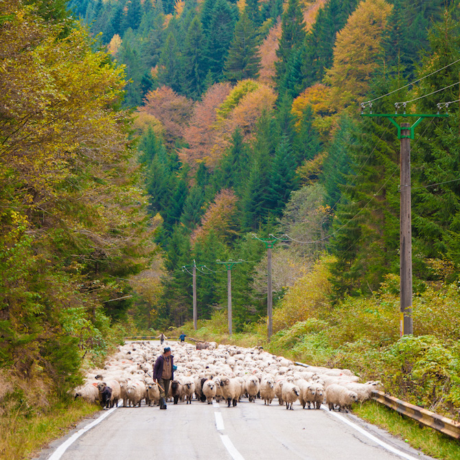 Rush hour in the Transfagarasan Mountains