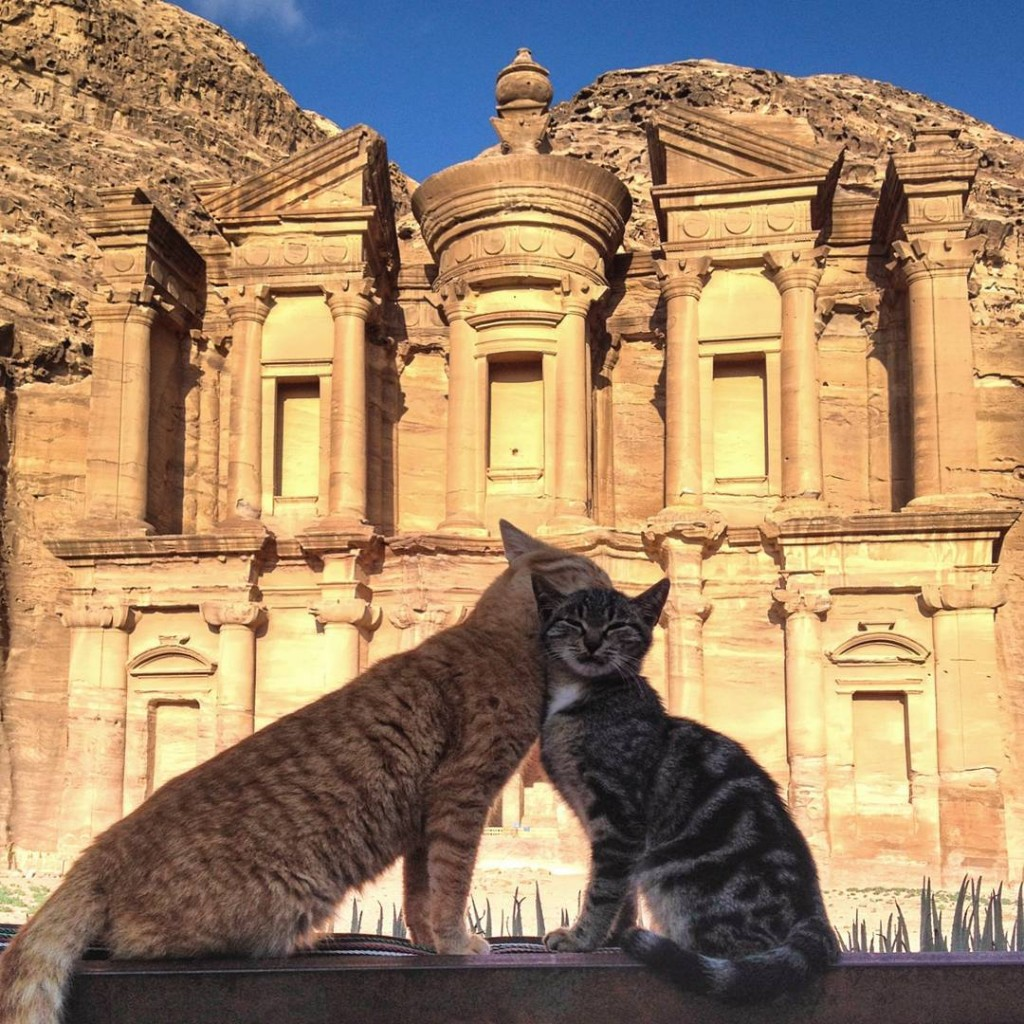 Cat love in Petra, Jordan