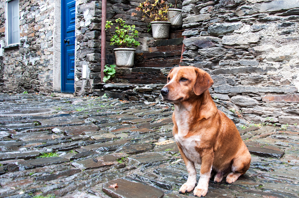 Even dogs are captivated by the beauty of the Center of Portugal!