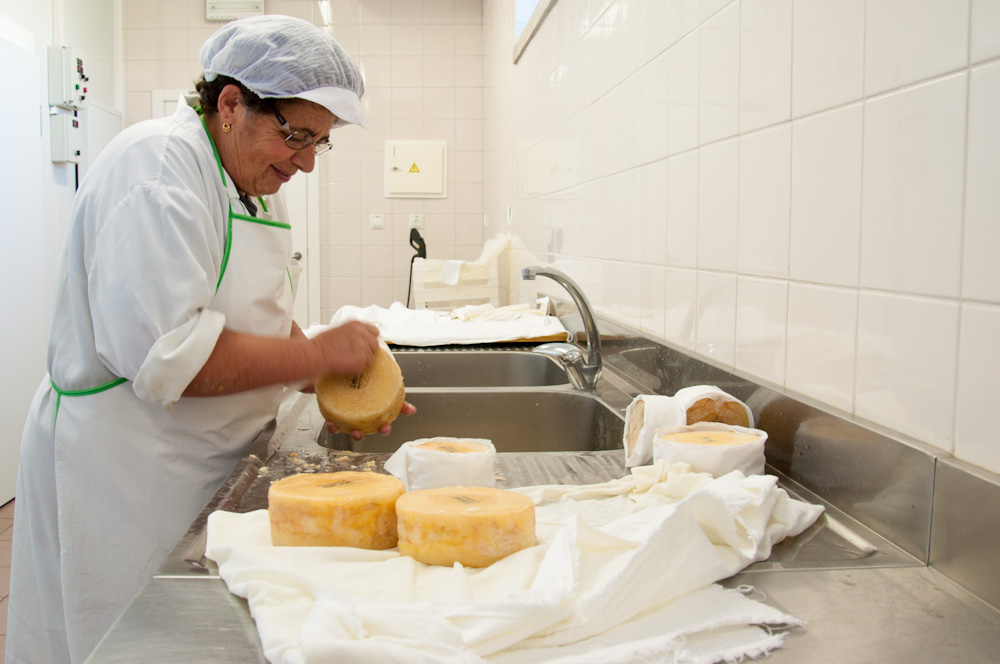 Inspecting wheels of Serra da Estrela cheese before they are sold