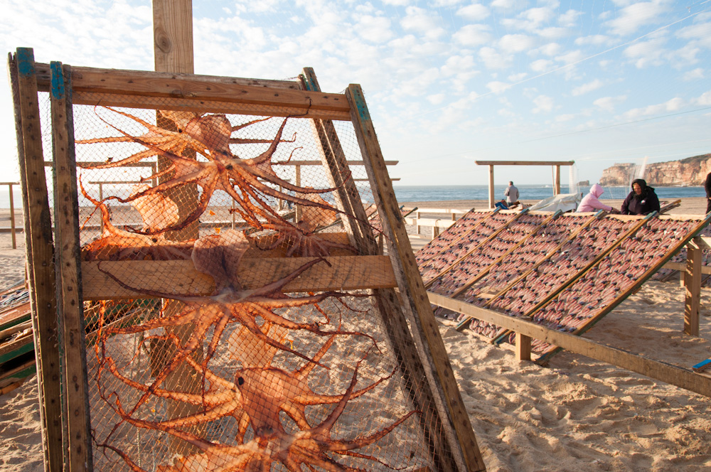 Octopus and fish drying under the sun of Nazaré.